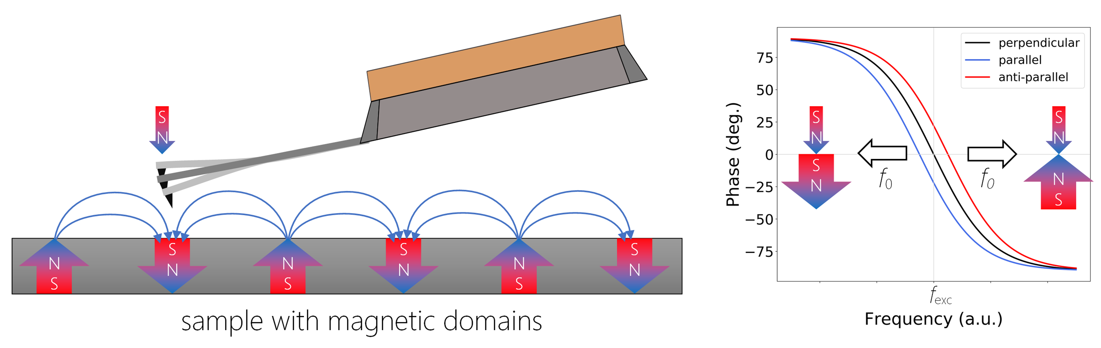 Figure 1. A schematic representation of MFM. If the local magnetic moments are parallel, i.e. magnetic field in the sample is aligned in the direction of the tip magnetization, there is an attractive force causing a negative phase shift (blue curve), in the anti-parallel orientation (red curve), the repulsive force causes positive phase shift from the excitation frequency fexc. There is no shift in case when the magnetic fields of tip and sample are perpendicular to each other.