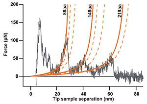 Single molecule force spectroscopy of bacteriorhodopsin