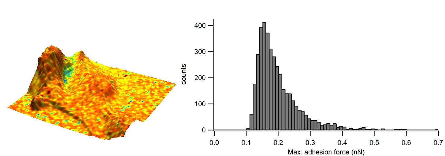 Figure 3. Adhesion overlaid in colour on the 3D representation of the sample height and corresponding adhesion distribution as a histogram.
