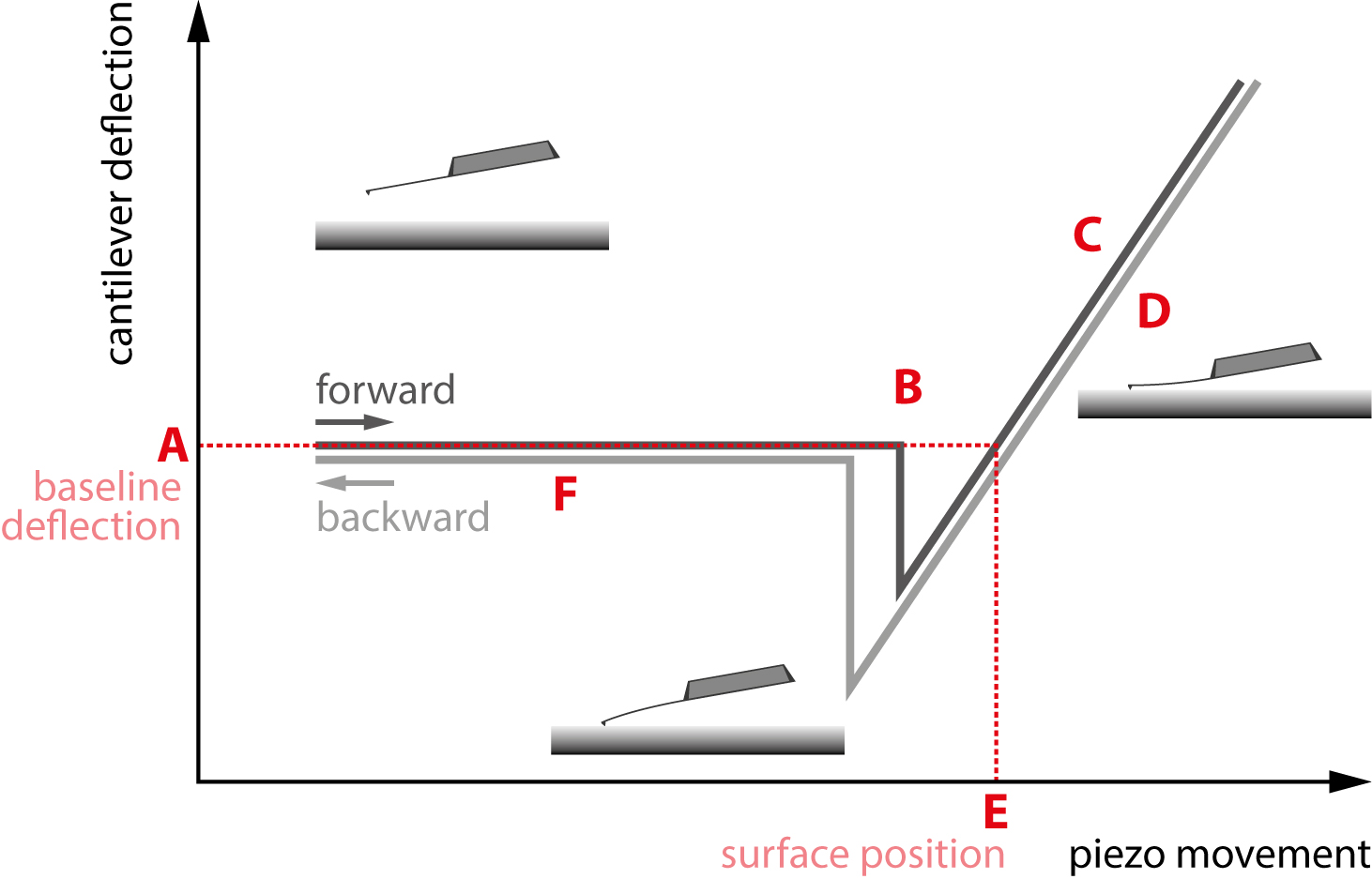 Figure 1. A standard force curve. The different regions of interest are marked A through F.