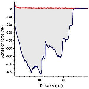 Representative example of the force-distance (F-D) curves that were obtained with a HeLa cell on fibronectin.