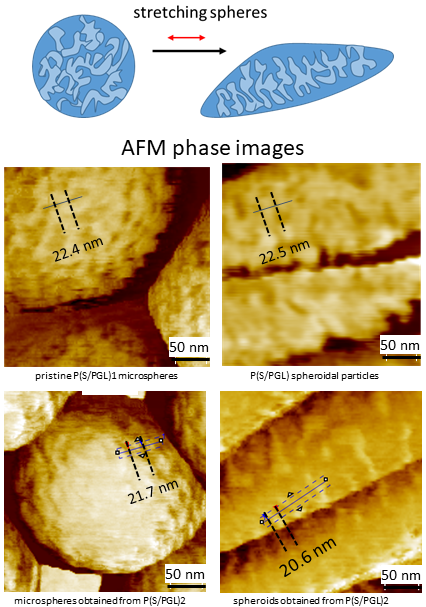 AFM phase images of microspheres and spheroids