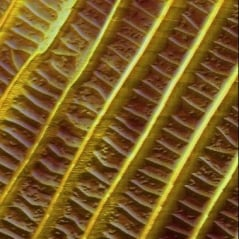 AFM image of butterfly wings