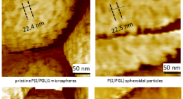 Flex-Axiom used to study domain re-arrangements of microparticles upon stretching by phase contrast AFM imaging