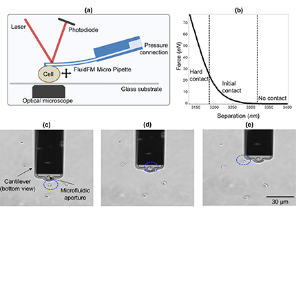 Deformability Assessment of Waterborne Protozoa Using a Microfluidic-Enabled Force Microscopy Probe