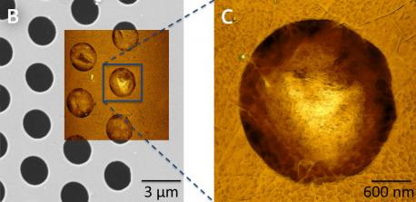 correlative imaging of graphene with afm and sem